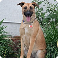 Adopt A Pet :: Lucy 2 - San Diego, CA