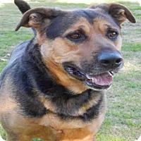 Adopt A Pet :: JOLLY - Upland, CA