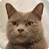 Adopt A Pet :: Peanut - Greenfield, IN