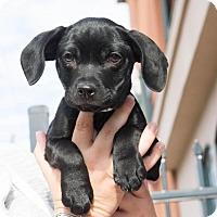 Adopt A Pet :: Charlotte - Boston, MA