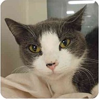 Adopt A Pet :: Medusa - Maywood, NJ