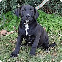 Adopt A Pet :: *Selena - PENDING - Westport, CT