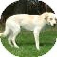 Adopt A Pet :: Guero - Denver, CO