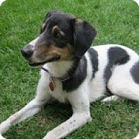 Adopt A Pet :: Gracie - Loveland, CO