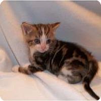 Adopt A Pet :: Dante - Acme, PA