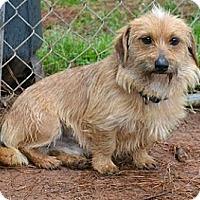 Adopt A Pet :: Norris - Athens, GA