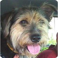 Adopt A Pet :: GAVIN - Houston, TX