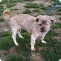 Adopt A Pet :: Cinderella - Southampton, PA