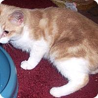 Adopt A Pet :: Buffy - brewerton, NY