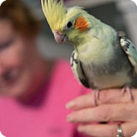 Adopt A Pet :: Dougie & Moses - St. Louis, MO