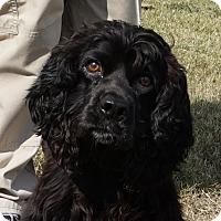 Adopt A Pet :: Trooper - Charlemont, MA