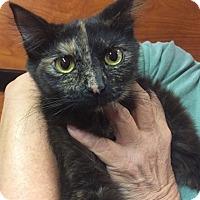 Adopt A Pet :: Anna - Marion, NC