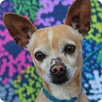 Adopt A Pet :: CLARK: Senior4Senior Eligible - Red Bluff, CA