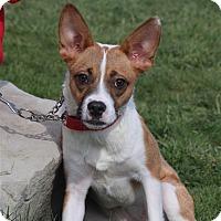 Adopt A Pet :: Zena - Elyria, OH