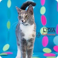 Adopt A Pet :: Lydia - Columbus, OH