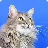 Adopt A Pet :: Goliath - Carencro, LA
