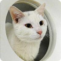Adopt A Pet :: Kodiak - Topeka, KS
