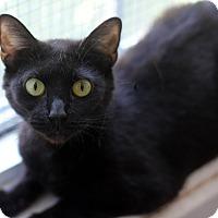 Adopt A Pet :: Emmy - Dalton, GA