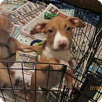 Adopt A Pet :: A385551    Janet - San Antonio, TX