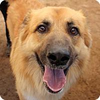 Adopt A Pet :: Teddy - Austin, TX