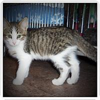 Adopt A Pet :: LUCA - Medford, WI