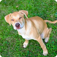 Adopt A Pet :: Mary Kay - Dayton, OH