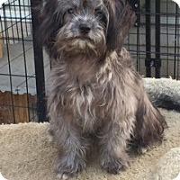 Adopt A Pet :: Olsen - McKinney, TX