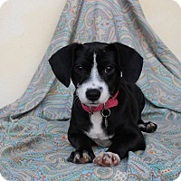 Adopt A Pet :: Amy - Los Angeles, CA