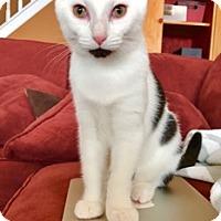 Adopt A Pet :: Penny - Cincinnati, OH