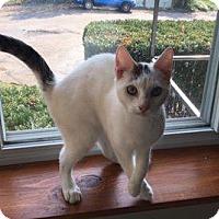 Adopt A Pet :: Jaeger - Danbury, CT