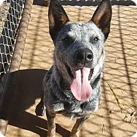 Adopt A Pet :: Sadie - Crosbyton, TX