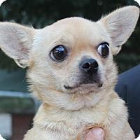 Adopt A Pet :: Chicka - Daleville, AL