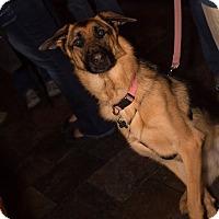 Adopt A Pet :: Zoey - Grand Rapids, MI