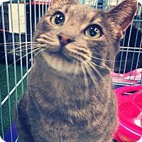 Adopt A Pet :: Willie - Mansfield, TX