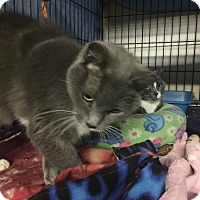 Adopt A Pet :: Lucy - Byron Center, MI