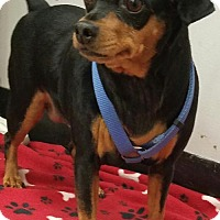 Adopt A Pet :: Princess3 - Conroe, TX