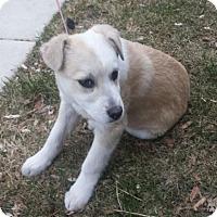 Adopt A Pet :: Jubilee Jae - Salt Lake City, UT