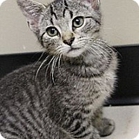 Adopt A Pet :: Scotty - Chicago, IL