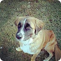 Adopt A Pet :: haggard - Gadsden, AL