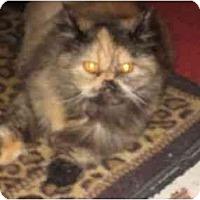 Adopt A Pet :: Morticia - Beverly Hills, CA