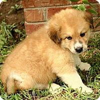Adopt A Pet :: Haden - Brattleboro, VT