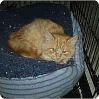 Adopt A Pet :: Sunshine - San Ramon, CA