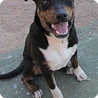Adopt A Pet :: Roxx - Toluca Lake, CA