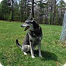 Adopt A Pet :: Kenzie - Courtesy Listing