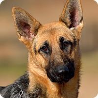 Adopt A Pet :: Parker - Dacula, GA