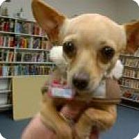 Adopt A Pet :: Chico - Seattle, WA