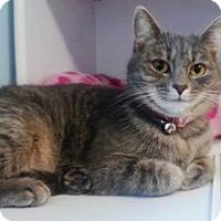 Adopt A Pet :: Bryson - Waxhaw, NC