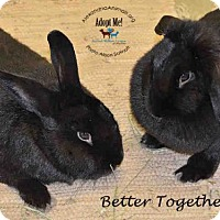 Adopt A Pet :: Samantha - Alexandria, VA