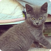 Adopt A Pet :: Nova - Gainesville, FL