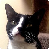 Adopt A Pet :: Petey - Winchester, CA